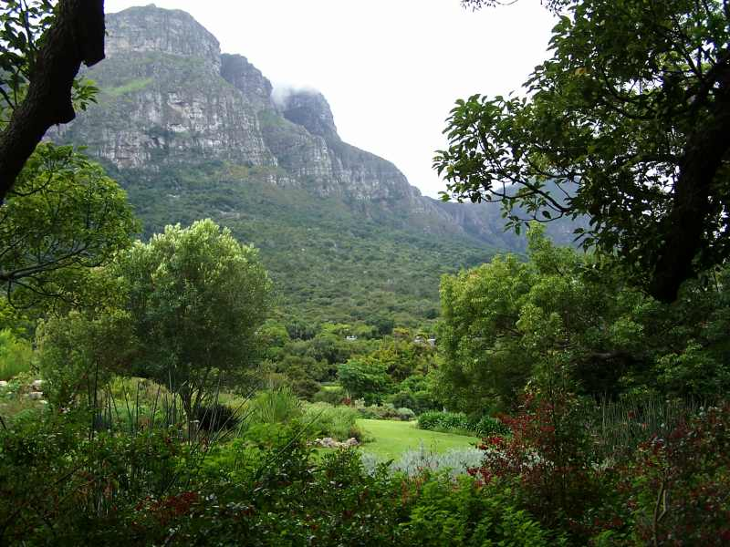 Kirstenbosch National Botanical Garden with a beautiful mountain backdrop