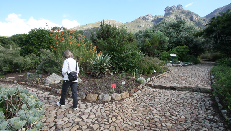 Kirstenbosch National Botanical Garden paths