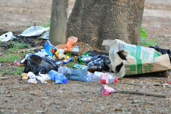 Vervet Monkeys have been here - they will turn your garbage upside down in no time at all!