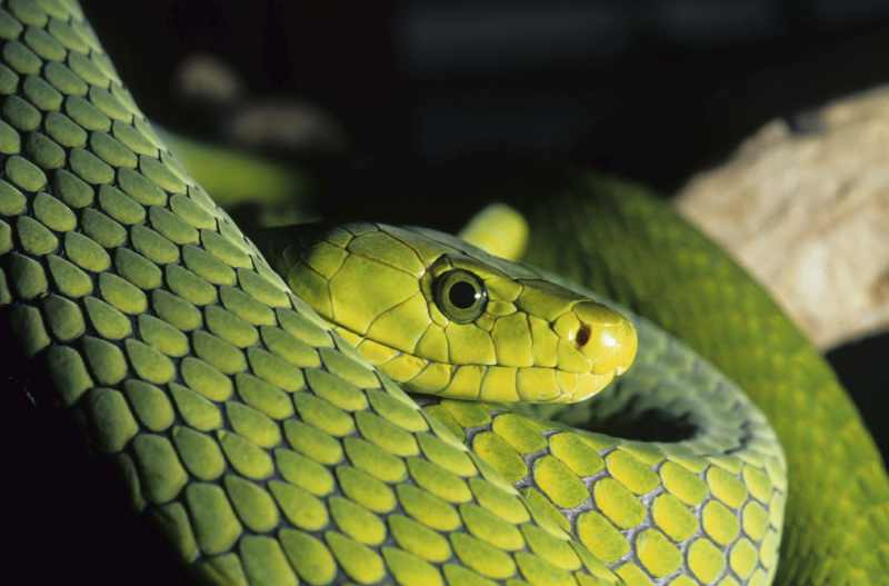 Meet some of South Africa's deadly snakes