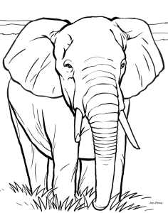 An elephant colouring in picture
