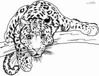 A leopard colouring in picture