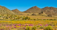 Visit the Northern Cape